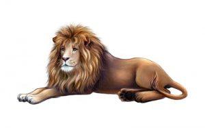 Три леви