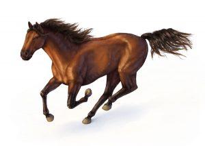 Гей, заведи коня!